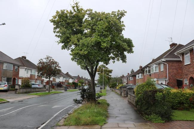 Wirral Council has committed to replacing every tree that it cuts down in the borough. Photo: Richard Garnett